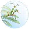 Logo de Manti'Bulle