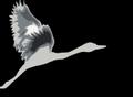 Logo de CROCE COSTA AFV